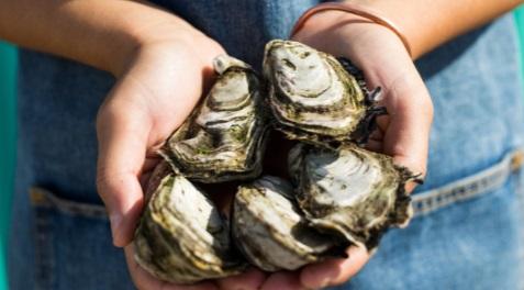 oysterfarm